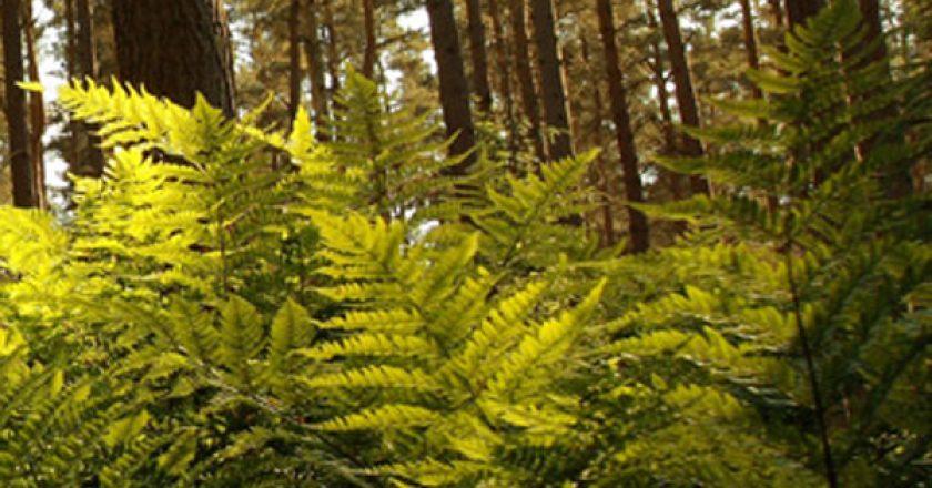 Histoire forestière de Bury