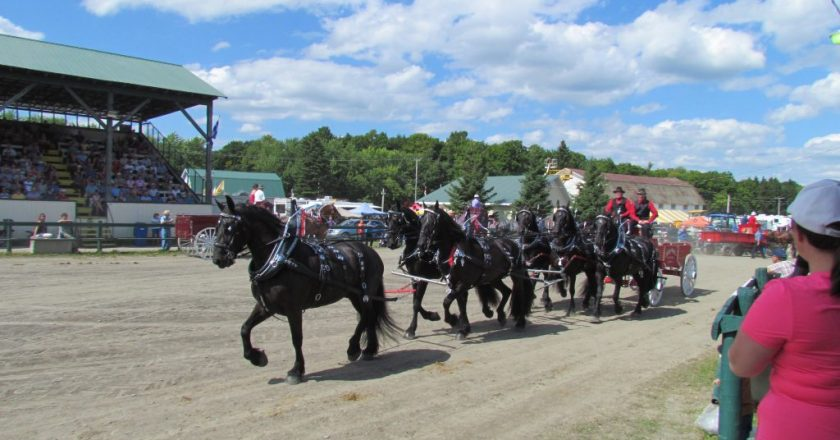 parade chevaux