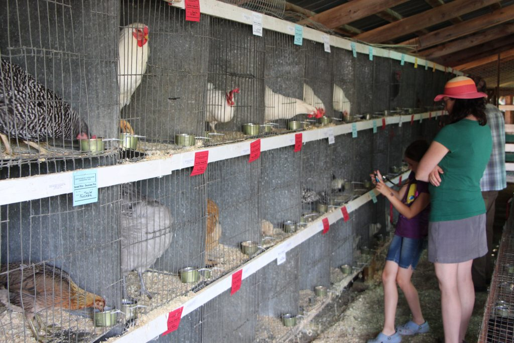 Exposition agricole de Cookshire