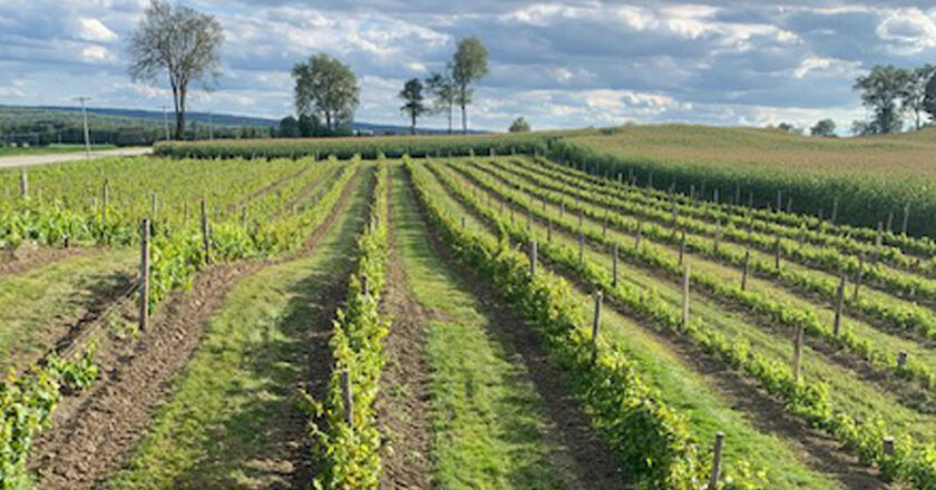 Vignobles Cookshire-Eaton