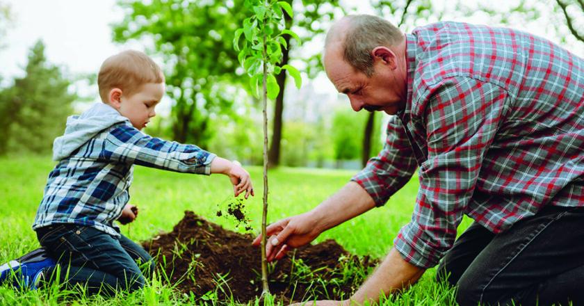 7 conseils pour planter un arbre et favoriser sa croissance